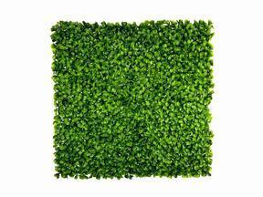 Kunstblad paneel Peperomia - 50x50 cm