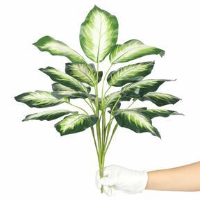 Kunstplant Dífenbachia wit 50 cm